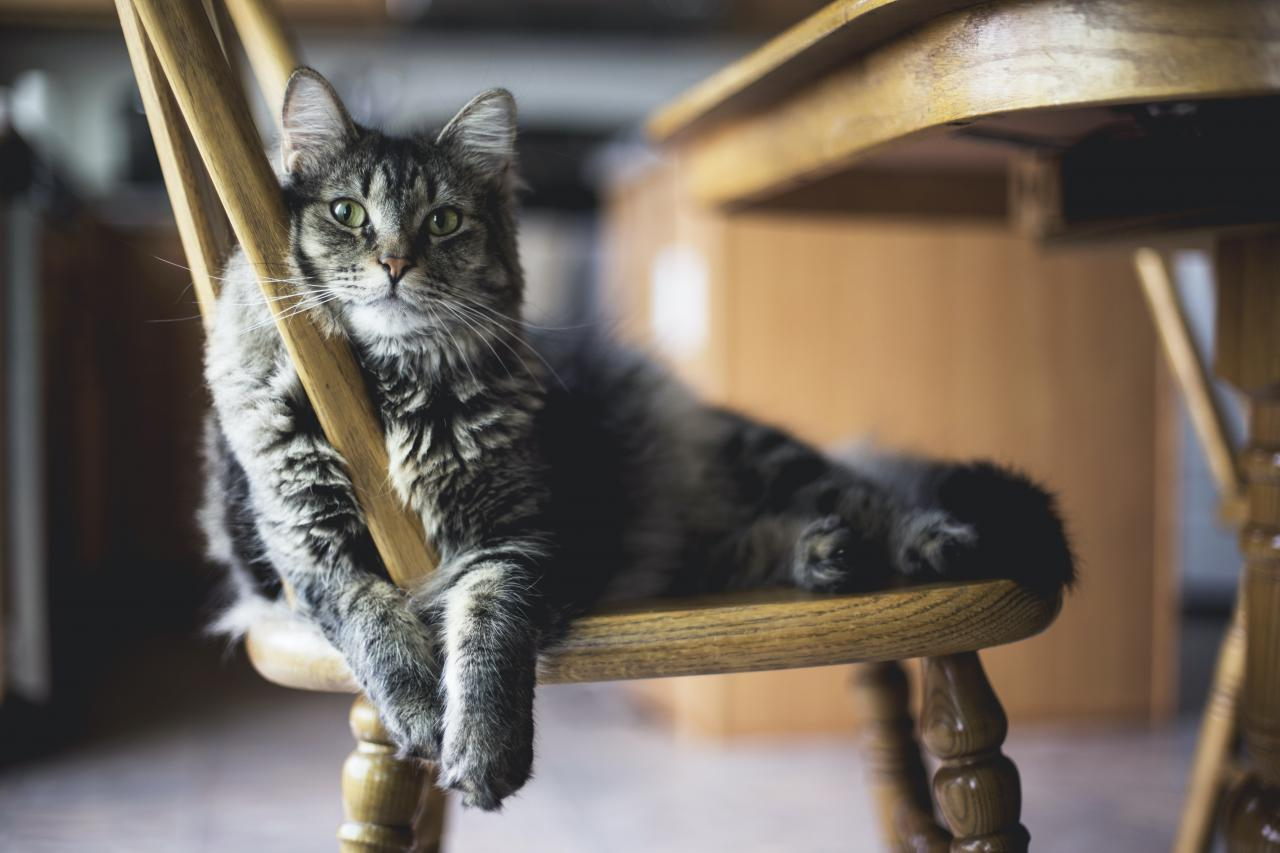 5 Reasons Why Natural Healing For Cats is the Best Medicine